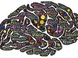 Come il cervello sembra non poter apprendere una lingua in 15 giorni.